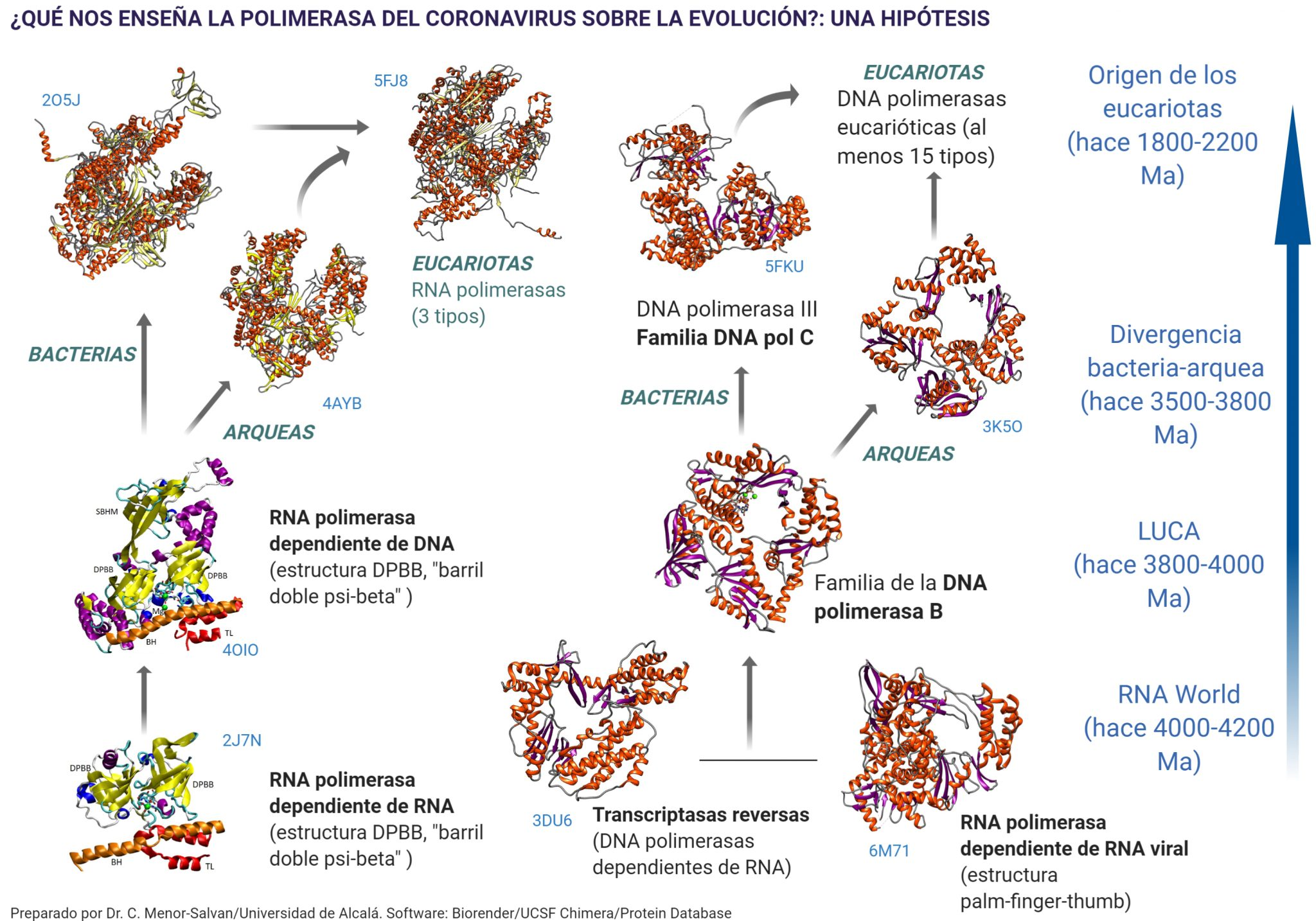 This image has an empty alt attribute; its file name is evolution-with-polymerases-1-2048x1434.jpeg